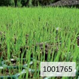 Reinforcement Mesh Lattice Green 2000mm Wide x 4mm at Polymax