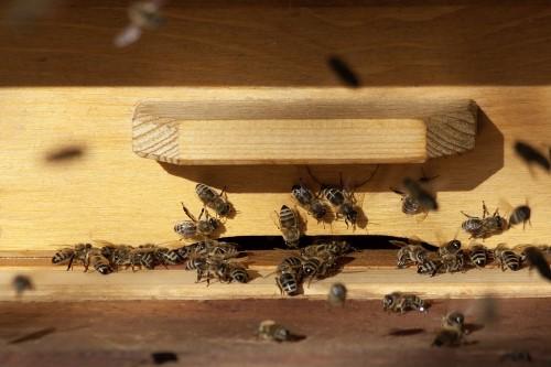 beekeeping-hive